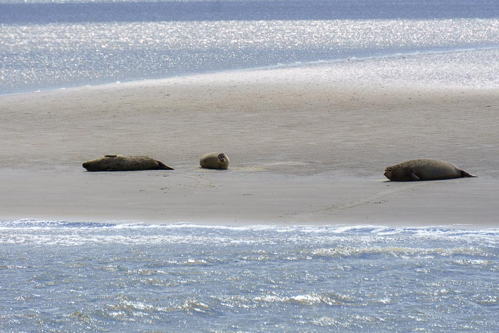 Seehundbänke vor Cuxhaven