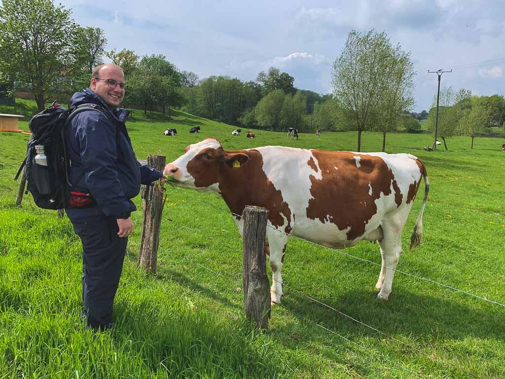 Teutoburger Wald wandern - Weide mit Kuh
